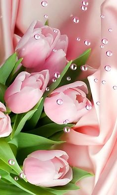 Pretty Pink Roses - My site Beautiful Rose Flowers, Beautiful Flowers Wallpapers, Pretty Wallpapers, Exotic Flowers, Amazing Flowers, Pretty Flowers, Black Flowers, Flower Background Wallpaper, Flower Phone Wallpaper