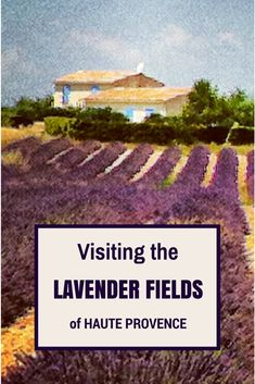 visiting the lavender fields in Provence is a summer must-do! via @loumessugo