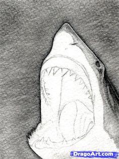 how to draw a shark head step 7