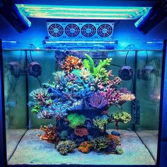 Tag your favorite Reef / Coral / Fish Account. so many good Reefers out there. Saltwater Aquarium Setup, Coral Reef Aquarium, Saltwater Fish Tanks, Marine Aquarium, Aquarium Design, Marine Fish Tanks, Marine Tank, Nano Reef Tank, Reef Tanks