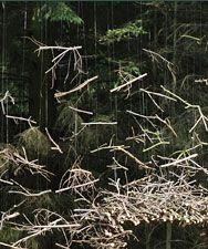 Cornelia Konrads' natural art: Passage