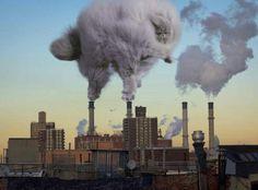 Cat-polution