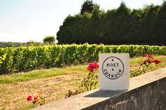 study tour 2012 // Moët & Chandon, Crémant, Champagne - Côte des Blancs