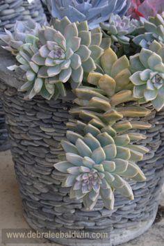 Succulents in a pebble pot