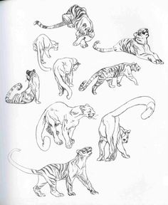 Academy of Art Character and Creature Design Notes: Claire Wendling's Cats