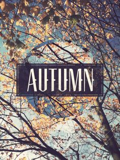 We can't wait for Autumn to start!! Leaves changing colors, crisp air, and pumpkin lattes.