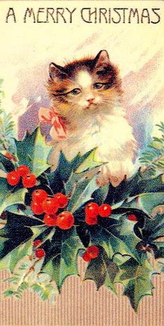 Kitty with Holly Berries