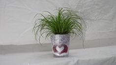 Luxury Christmas Cat Plant Gift Set - Potted plant with Christmas Pot Cover -Delivery in first week of December or Before - A stunning gift that will last for more than just Christmas - Ideal alternative to Christmas Cards - Create the perfect gift combination - Variety pot options with gift wrap available - Cyperus Alt Zumula. (1, Love Heart): Amazon.co.uk: Kitchen & Home