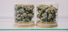 How Will Canadian LPs Supply Product to All Canadians on Legalization Day?