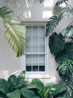 A tropical house that smells like holidays: a window open to nature and greenery Interior And Exterior, Exterior Design, Exterior Colors, Motif Tropical, Tropical Plants, Tropical Leaves, Tropical Garden Design, Estilo Tropical, Tropical Vibes