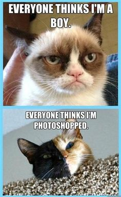 Angry cat & cat photoshopped!