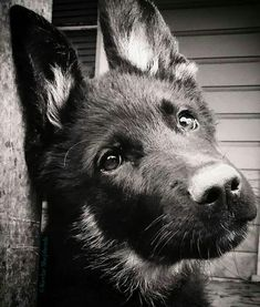 Click visit site and Check out Cool \\German Shepherd\\ T-shirts. This website is outstanding. Tip: You can search \\your name\\ or \\your favorite shirts\\ at search bar on the top.