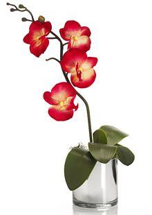 Artificial orchid from M&S
