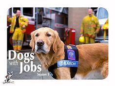 Dogs with Jobs Season 1 Amazon Instant Video ~ John Ralston, https://smile.amazon.com/dp/B0112O9GZC/ref=cm_sw_r_pi_dp_Ud4Yxb51FXN3P