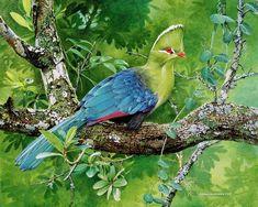 Knysna Lourie (Turaco) - 1997 Johan Hoekstra Wildlife Art (Available Print) Wildlife Paintings, Wildlife Art, Exotic Birds, Colorful Birds, Wild Life, Most Beautiful Birds, Knysna, Bird Wallpaper, Funny Birds
