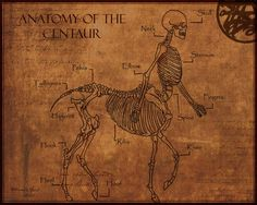 Anatomy of a Centaur and other anatomical drawings of mythical creatures.