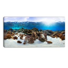 Found+it+at+Wayfair+-+Indonesia+Underwater+Panorama+Photographic+Print+on+Wrapped+Canvas