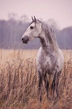 equus equine し cheval gris tacheté grey horse All The Pretty Horses, Beautiful Horses, Animals Beautiful, Cute Animals, Beautiful Horse Pictures, Pretty Animals, Beautiful Beautiful, Equine Photography, Animal Photography