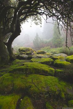 With the feeling of the cool dampness against my skin, and still greeness that hung in the air... (Cragside, England) by Mustafa Akarsu