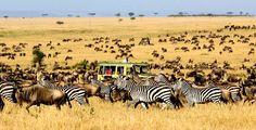 Serengeti, uno dei parchi più famosi del mondo, il set di uno spettacolo naturale unico sul pianeta, la grande migrazione degli gnu.