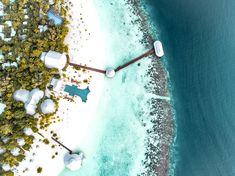 5 Gründe Malediven Urlaub - The Chill Report empfiehlt Dandelion, Luxury, Flowers, Plants, Sparkling Stars, Night Skies, Starry Night Sky, Dandelions, Plant