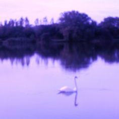 Swan Lake in Blues