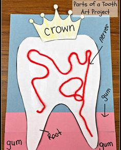 This seems to be quite popular in my store. Fun, engaging, and academic Parts of a Tooth Craft. [temp link in profile] Also, available in the Dental Health Bundle. #kindergartenchaos #dentalhealth #tpt