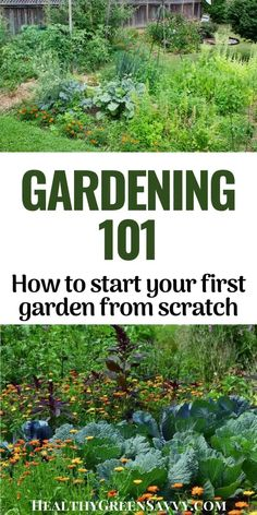 Ready to try planting your first garden? Here's how to plant a garden, even if you've never grown anything before! It's easier than you might think. Welcome to gardening 101!  #gardeningtips  #gardening101 #beginnergardening #vegetablegardening Gardening Books, Gardening Tips, Vegetable Garden, Garden Plants, Green Living Tips, Survival Prepping, Survival Gear, Survival Shelter, Outdoor Survival
