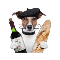 french dog wine baguete beret ❤ liked on Polyvore featuring animals