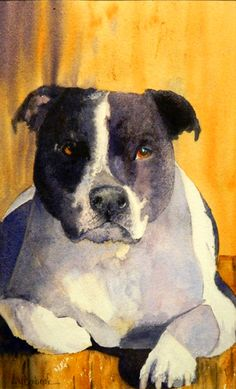 Watercolor painting of my staffie Axel basking in the sun