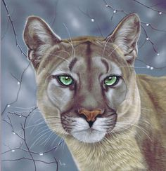 Puma winter painting in pastels from Art by Karie-Ann #puma #mountain #lion