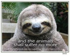 Animals shall suffer no more, animal rights