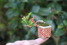 Super mini bonsai of Miyama kaido | super mini bonsai blog