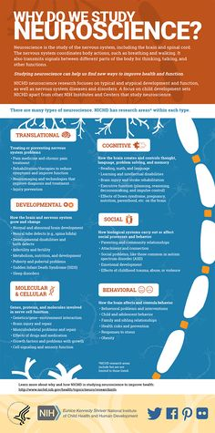 This infographic outlines different types of neuroscience research supported and conducted by the Eunice Kennedy Shriver National Institute of Child Health and Human Development.
