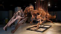 Spinosaurus Takes Over Nat Geo