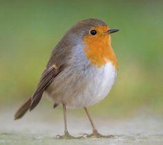 Felt Birds, Birds 2, Love Birds, Needle Felted Animals, Felt Animals, Cute Animals, European Robin, Robin Redbreast, Robin Bird