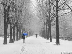 #Neve a Novara #Novara - #Parco dell'Allea - #Viale delle Carrozze