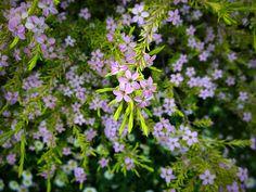 Ten shrubs anyone can grow