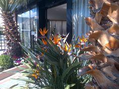 #orange #flowers in #loano2village #reception #beautiful #green #tree #goodday #summer #sunnyday #italy #summerinriviera