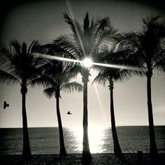 Five palms, two birds