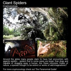 Giant Spiders. If you have a phobia for spiders I suggest giving this one a miss... for the rest of you, read more here:  http://www.theparanormalguide.com/blog/giant-spiders