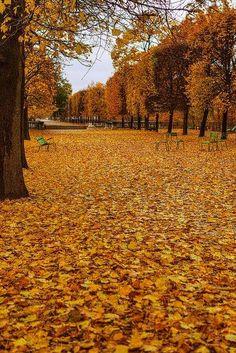 O outono dourado do Jardin de Tuileries! Sutil e apaixonante!