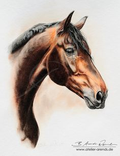 """Watercolor Horseportrait by AteWatercolor Horseportrait by AtelierArends Traditional Art / Paintings / AtelierArends The """"Beauty"""" named Hans. Met him years ago. Pretty Horses, Beautiful Horses, Animals Beautiful, Horse Drawings, Animal Drawings, Arte Equina, Stippling Art, Horse Silhouette, Horse Portrait"""