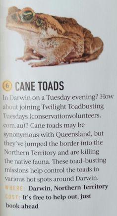 DARWIN Twilight Toadbusting Tuesdays - FREE! conservationvolunteers.com.au Darwin, Twilight, Australia, Free
