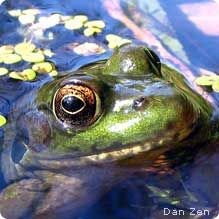 Build a Backyard Pond to attract wildlife! To learn about how to live with wildlife successfully, visit www.SPCAmc.org