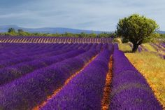 30 Deep and Rich Purple Colored Photographs