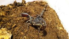 . Scorpion, Desserts, Food, Collection, Meal, Scorpio, Deserts, Essen, Hoods