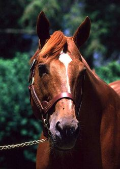 Secretariat-When I think I have found just about every photo of him , I find one more! He was a beauty!
