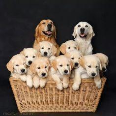 Cani di ogni razza