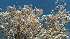 Flores de Sorocaba